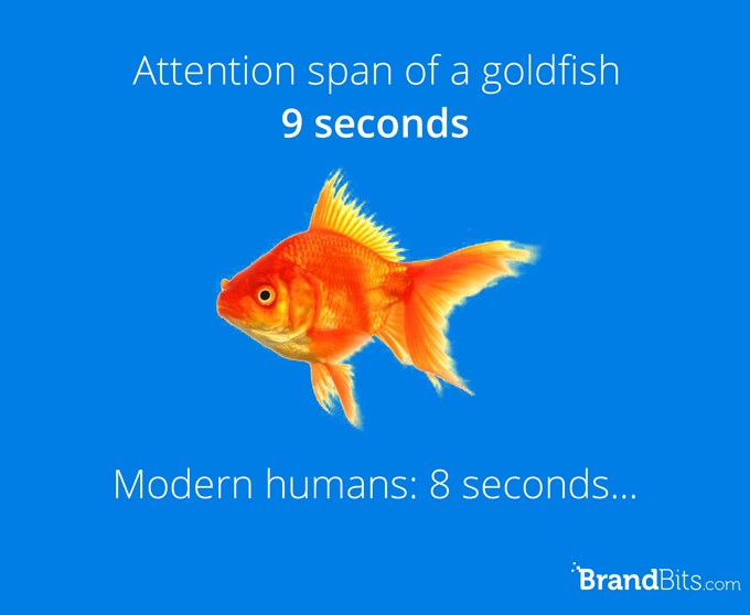 Goldfish have larger attentionspan than humans